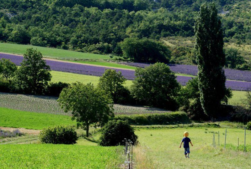 Circuit en roulotte en famille dans le pays de Dieulefit-Bourdeaux et forët de Saouu à Le Poët-Célard - 10