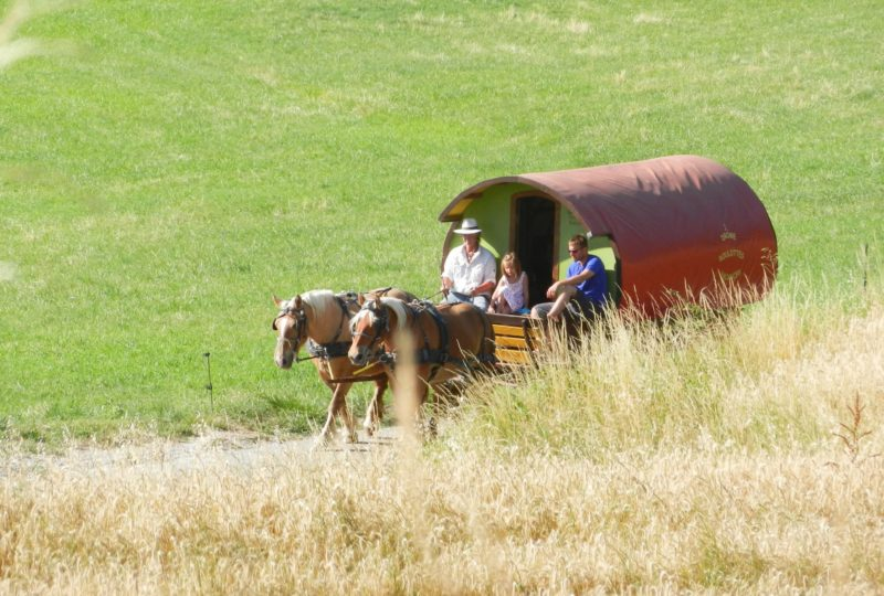 Short break in a horse-drawn caravan à Le Poët-Célard - 0