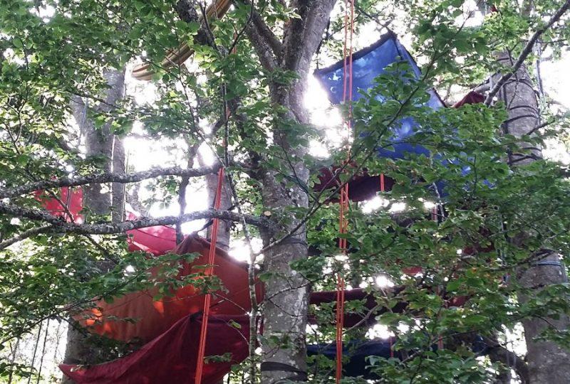 Grimpe d'arbre – ArKad'Arbre – Magali GREZ à Pont-de-Barret - 0