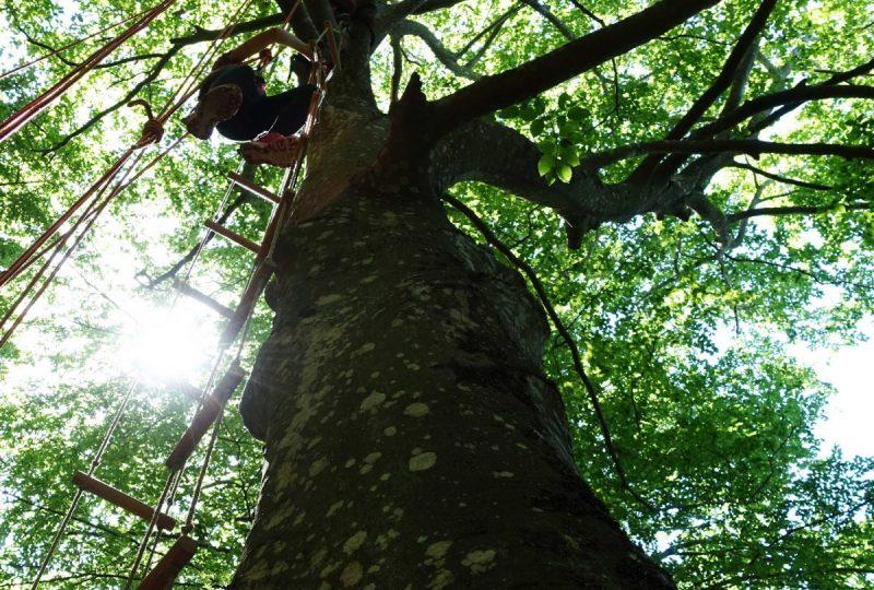 Grimpe d'arbre – ArKad'Arbre – Magali GREZ à Pont-de-Barret - 3