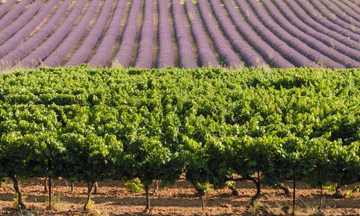 Les Vignerons de Valléon – Caveau de St Gervais sur Roubion à Saint-Gervais-sur-Roubion - 2