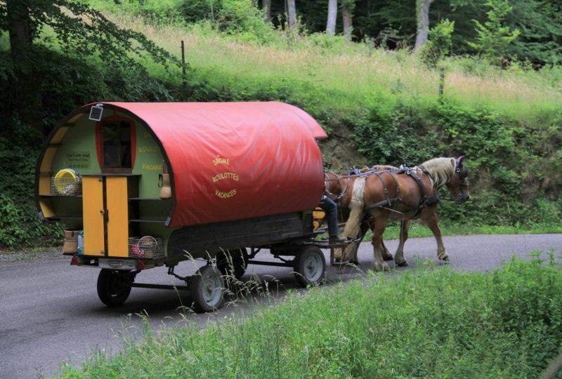 Your holidays in a horse-drawn caravan à Le Poët-Célard - 2