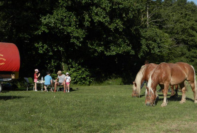 Your holidays in a horse-drawn caravan à Le Poët-Célard - 3
