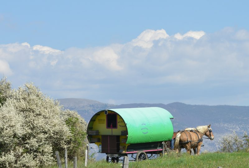 Your holidays in a horse-drawn caravan à Le Poët-Célard - 5