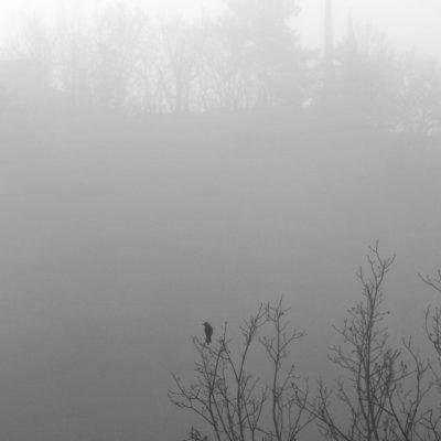 hiver - oiseau - brume -paysage - Drome