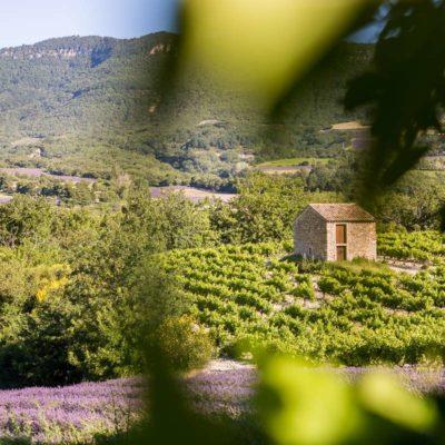 Bories et lavandes- culture - champs - couleur -saison-