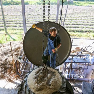 Distillation lavande et essence de lavande d'Anna Puig lavande