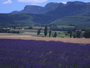 Lavande or bleu - Bourdeaux - Provence - Drome - Champs