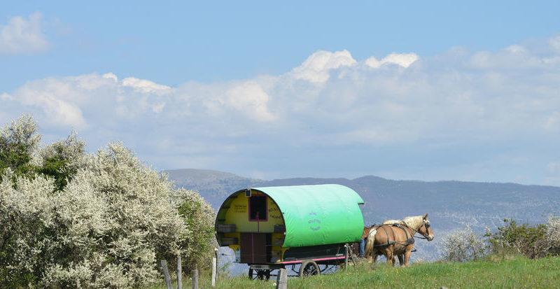 «L'Escapade» : 3 circuits et 3 nuits en roulotte itinérante avec chevaux et meneur à Le Poët-Célard - 5