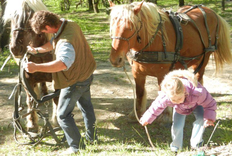 Séjour bohème : 5 jours en roulotte tirée par des chevaux à Le Poët-Célard - 4