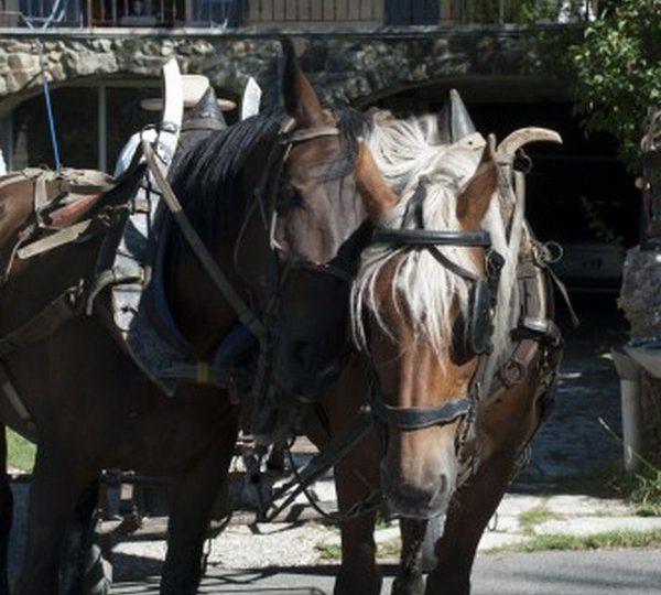Promenades et randonnées en attelage à cheval – Le Relais du Temple à Mornans - 2