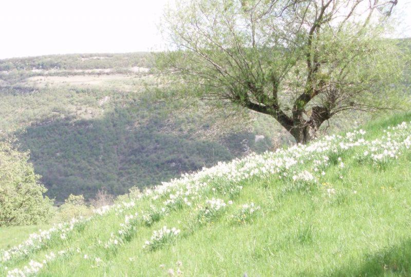 Tour du Pays de Dieulefit-Bourdeaux, Chemin de Grande Randonnée de Pays (GRP) à Le Poët-Laval - 1
