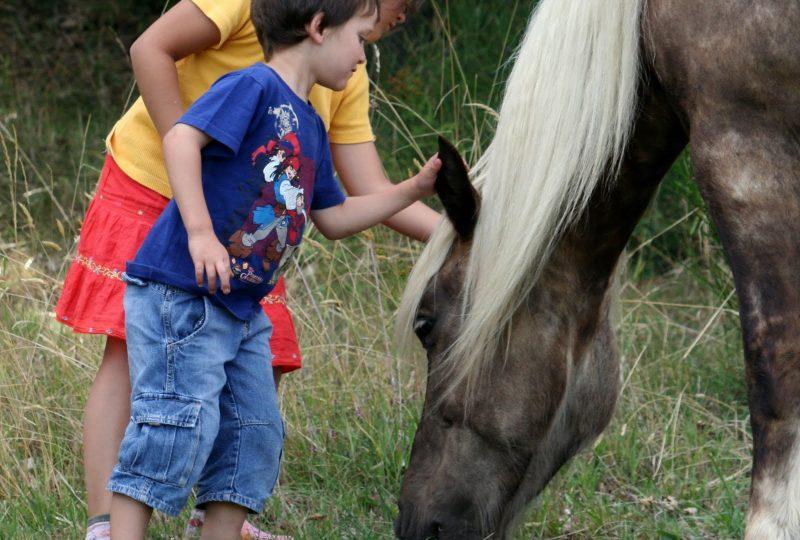Vacances en roulotte itinérante avec chevaux et meneur à Le Poët-Célard - 2