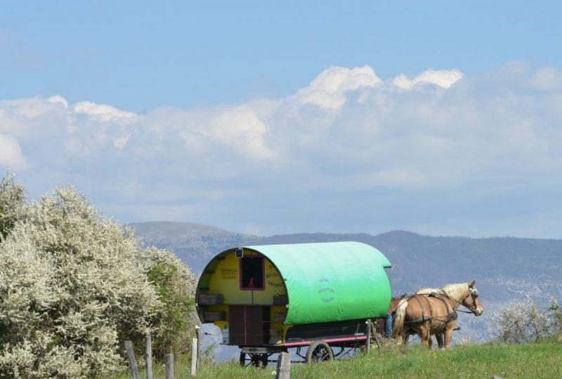 Vacances en roulotte itinérante avec chevaux et meneur à Le Poët-Célard - 4