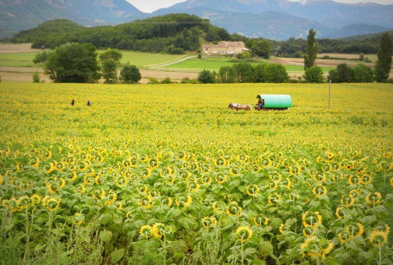 Vacances en roulotte itinérante avec chevaux et meneur à Le Poët-Célard - 5