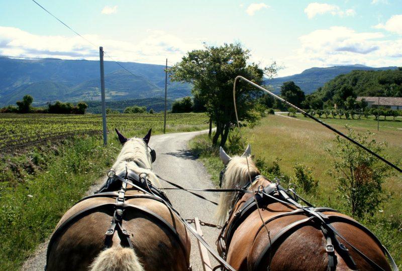 Vacances en roulotte itinérante avec chevaux et meneur à Le Poët-Célard - 8
